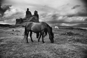Coeffin Castle Horses - Amy Davidson