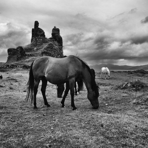 Coeffin Castle Horses