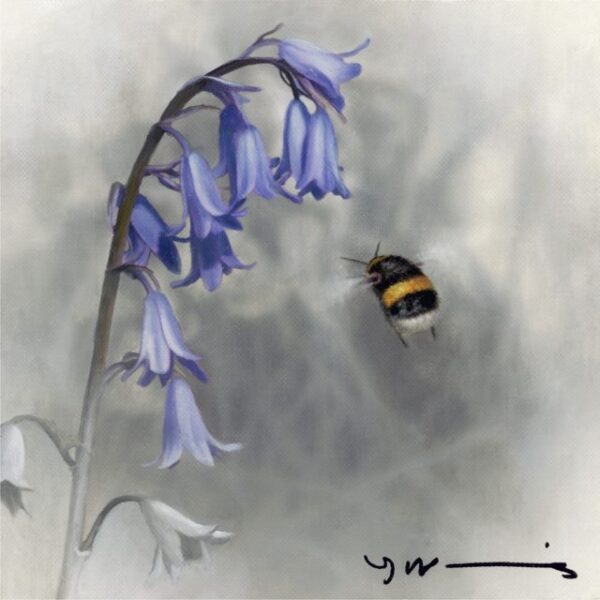 Bluebell – Buff Tail Bee