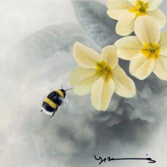 Primrose – White Tail Bee