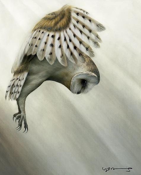 Silent Pursuit (Barn Owl)